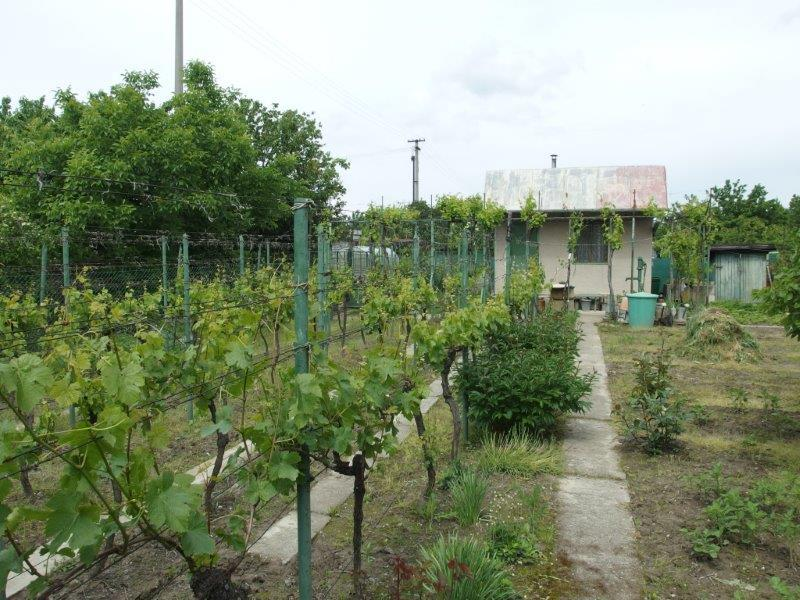 predaj-udrziavany-rekreacny-pozemok-murovany-domcek-pozemok-381-m2-podunajske-biskupice-31-500